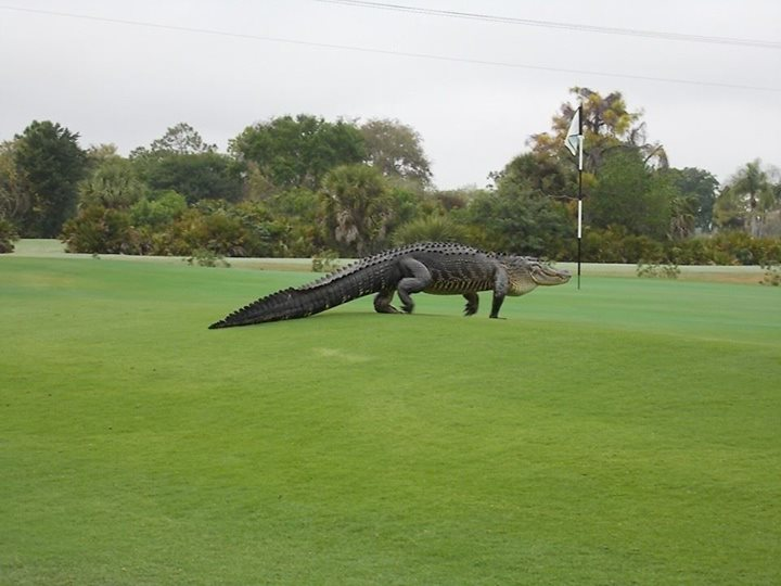 A Dinosaur-Alligator Wandered Onto a Florida Golf Course And Probably Scared The Shit Out of People