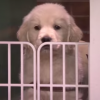 Stop What You're Doing And Watch Puppies Predict The Kentucky Derby On Fallon