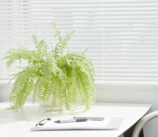 The Definitive Guide to Cubicle Decoration