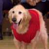 "Jimmy Kimmel's ""Air Bud"" Parody With 50 Cent Is A Movie I'd Actually Watch Because Dogs"