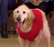 """Jimmy Kimmel's """"Air Bud"""" Parody With 50 Cent Is A Movie I'd Actually Watch Because Dogs"""