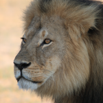 The Internet Unleashed Itself On The Yelp Page Of The Guy Who Killed Cecil The Lion