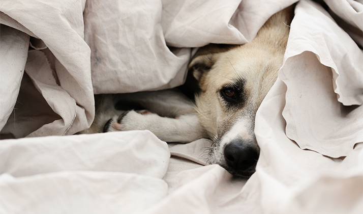 Study Says Sharing Your Bed With A Pet Means You'll Probably Get Better Sleep