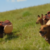 This Video Of Stampeding Weiner Dogs Will Turn Your Monday Around