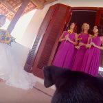 This Couple Had Rescue Dogs Tape Their Wedding With GoPros