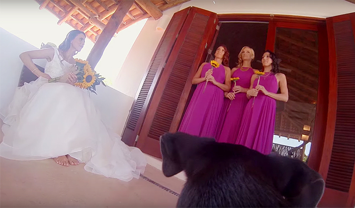This Couple Had Rescue Dogs Tape Their Entire Wedding With GoPros