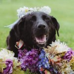 Break Out The Tissues - This Dog Stayed Alive Just For His Humans' Wedding