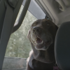 Try To Hold It Together Watching This Veteran Take His Terminally-Ill Dog On One Last Roadtrip