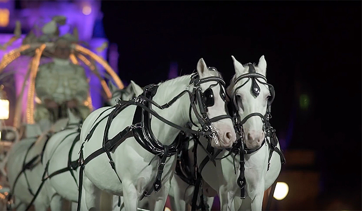 Disney World Is Now Opening Up The Magic Kingdom After-Hours For Private Weddings