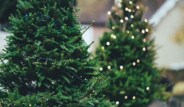This New York City Woman Is Charging Way Too Much For Christmas Trees And Needs To Be Stopped