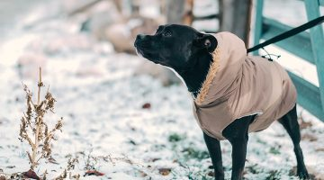 A Fed-Up Instagram Dog Goes To The Park