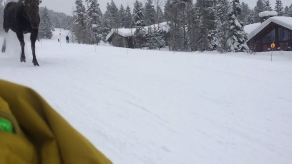 Stoke Level Was At An All-Time High For These Snowboarders Getting Rushed By A Blood-Thirsty Moose