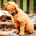 Breaking Down The American Kennel Club's List Of The Most Popular Dog Breeds