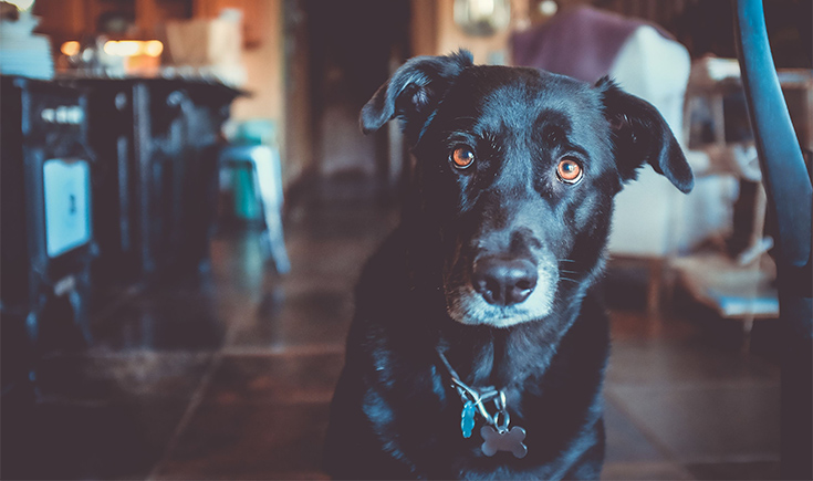 Black Dogs With White Paws Are Easily The Most Basic Dog Of 2017