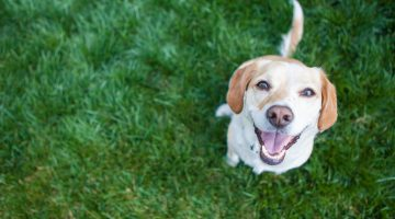 Don't Let Your Dog Poop In My Yard