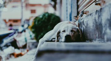 Hipster Dog Owners Are Now Becoming Anti-Vaxxers Because Of Course They Are